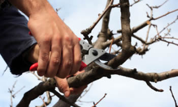 Tree Pruning in Tacoma WA Tree Pruning Services in Tacoma WA Quality Tree Pruning in Tacoma WA
