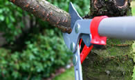 Tree Pruning Services in Tacoma WA